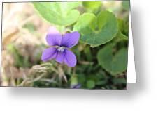 Purple Garden Flower Greeting Card