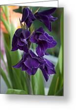 Purple Gladioli Greeting Card