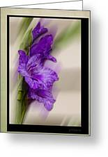Purple Gladiolus Greeting Card
