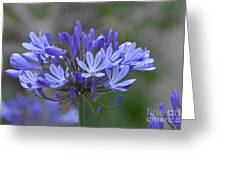 Purple Glory Greeting Card by Kay Pickens