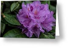 Purple Glory Greeting Card