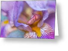 Purple Glow. Macro Iris Series Greeting Card
