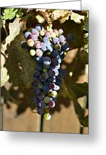 Purple Grapes Greeting Card