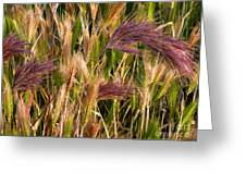 Purple Grasses Greeting Card