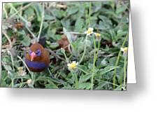 Purple Grenadier  Greeting Card