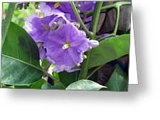 Purple Hearts Greeting Card
