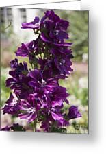 Purple Hollyhock Flowers Greeting Card