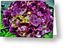 Purple Hortensia After Summer Rain Greeting Card