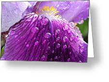 Purple Iris - 2 Greeting Card