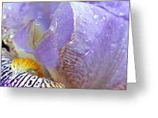 Purple Iris - 3 Greeting Card