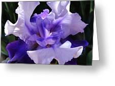 Purple Iris Bloom Greeting Card