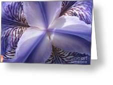 Purple Iris Inside Greeting Card