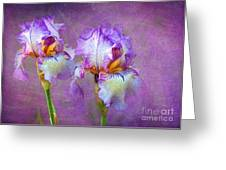 Purple Iris Greeting Card by Lena Auxier