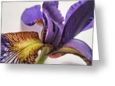 Purple Iris Macro 5 Greeting Card