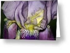 Purple Iris - Macro Greeting Card