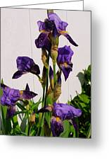 Purple Iris Stalk Greeting Card