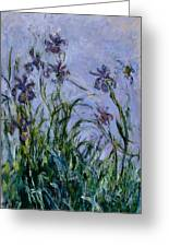Purple Irises Greeting Card
