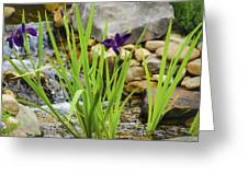 Purple Irises Growing In Waterfall Greeting Card