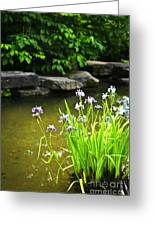 Purple Irises In Pond Greeting Card by Elena Elisseeva