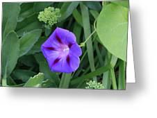 Blume-bestaubung Greeting Card