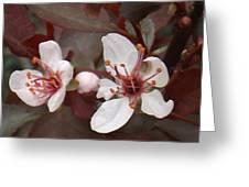 Purple Leaf Sand Cherry Burst Greeting Card
