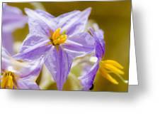 Purple Life II Greeting Card