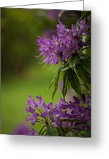 Purple Light Greeting Card