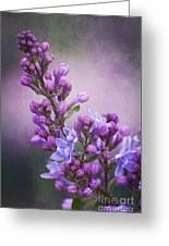 Purple Lilacs Greeting Card