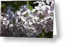 Purple Lilacs II Greeting Card