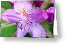 Purple Long Pistil Flower Greeting Card