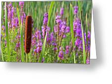 Purple Loosestrife And Cattail Plants Greeting Card
