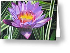 Purple Lotus With Striped Foliage Greeting Card