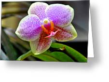 Purple Luv Greeting Card