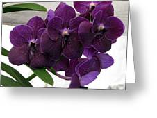 Purple Me Not Greeting Card