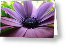 Purple Mexican Flower Greeting Card