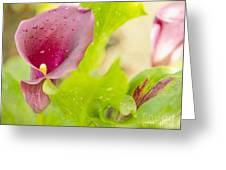 Purple Mini Calla Lily On A Sea Of Green Greeting Card