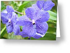 Purple Mokara Orchid Greeting Card
