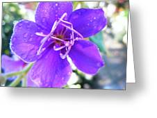 Purple Morning Dew Greeting Card