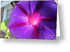 Purple Morning Glory - Flower Greeting Card