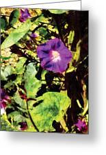 Purple Morning Glory Greeting Card