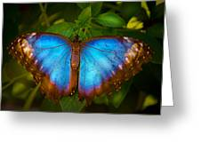 Purple Morpho Butterfly Greeting Card