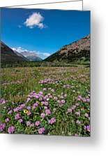 Purple Mountain Flowers Greeting Card
