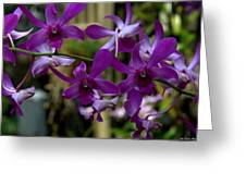 Purple On The Vine Greeting Card