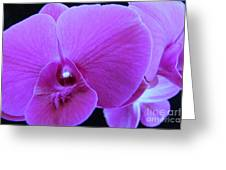 Purple Orchid 7 Greeting Card