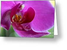 Purple Orchid Exploration  Greeting Card