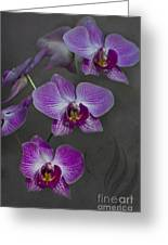 Purple Orchid Flower Greeting Card