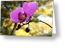 Purple Orchid In September Sun Greeting Card