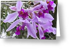 Purple Orchid Personality Greeting Card