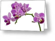 Purple Orchid-3 Greeting Card