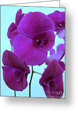 Purple Orchids 3 Greeting Card